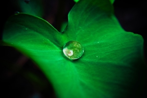 drop of water danist soh