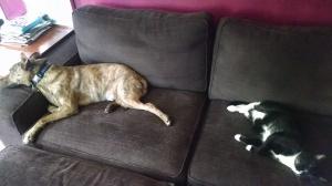 animals_sleeping