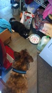 cat and dog back hallway